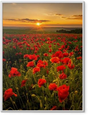 Póster com Moldura Poppy field at sunset