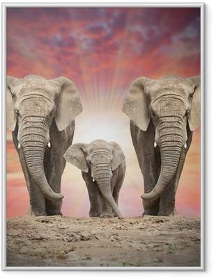 Poster in Cornice Famiglia elefante africano sulla strada.