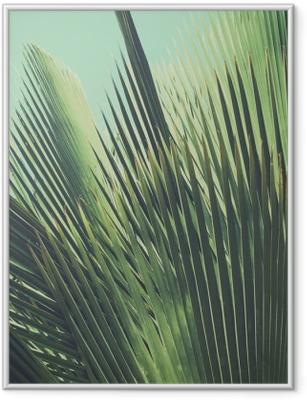 cb1f5812 Innrammet plakat Abstrakt tropisk vintage bakgrunn. Palm forlater i sollys.