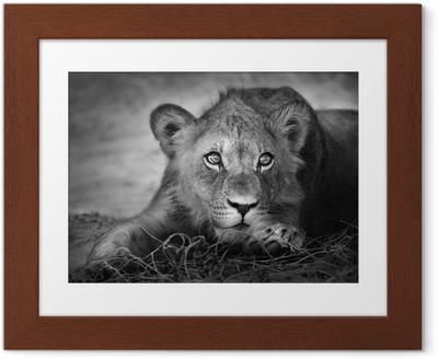 Poster in Cornice Ritratto di giovane leone
