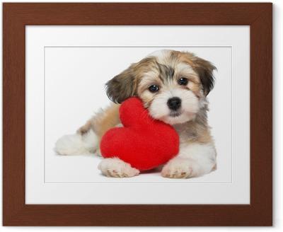 Poster i Ram Lover Valentine Havanese valp hund med ett rött hjärta