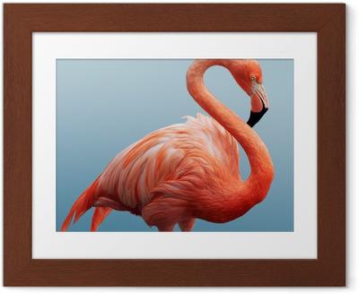 Flamingo Indrammet plakat