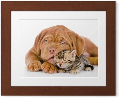 Poster in Cornice Bordeaux cucciolo di cane gioca con il gattino Bengala. isolato
