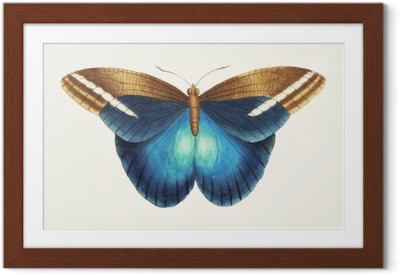Illustration of animal artwork Framed Poster