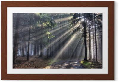 god beams - coniferous forest in fog Framed Poster