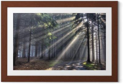 Ingelijste Poster Balken god - naaldbos in de mist