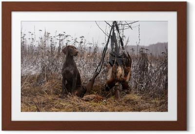 Poster en cadre Chien de chasse - Mammifères