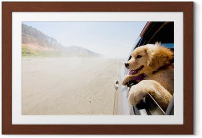 Póster com Moldura Cachorro olhando pela janela de um carro