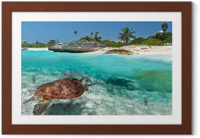 Karibian merimaisemia vihreällä kilpikonna Meksikossa Kehystetty juliste