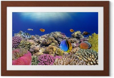 Vedenalainen maailma. punaviinin korallikaloja. Kehystetty juliste