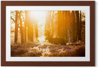 Poster en cadre Red Deer au soleil du matin.