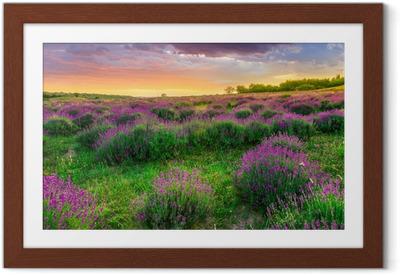Ingelijste Poster Zonsondergang over een zomer Lavendel veld in Tihany, Hongarije