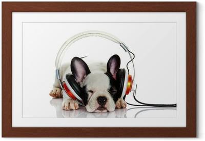Poster in Cornice Bulldog francese con la cuffia isolato su sfondo bianco