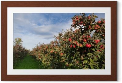 Poster in Cornice Mele mature sugli alberi nel frutteto