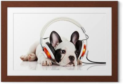 Poster i Ram Hund att lyssna på musik med hörlurar isolerad på vitt backgro