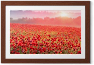 Poster i Ram Röd vallmo fält i morgondimman