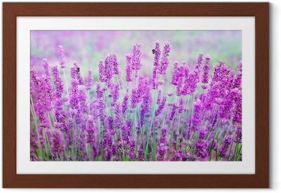 Póster com Moldura Lavender