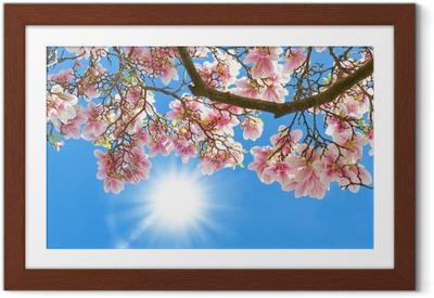 Magnolia in the sun Framed Poster