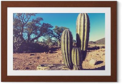 Poster en cadre Cactus au Mexique - Amérique