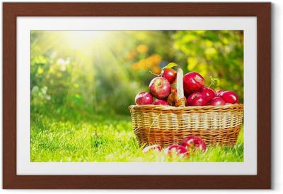 Poster en cadre Pommes organiques dans un panier extérieur. Orchard. Autumn Garden