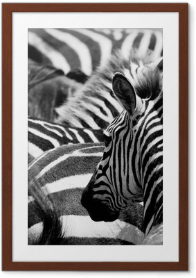 pattern of zebras Framed Poster