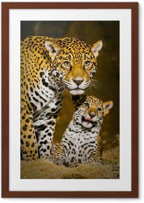 Gerahmtes Poster Jaguar Cubs