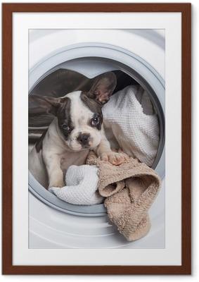 Poster i Ram Fransk bulldogg valp inne i tvättmaskinen