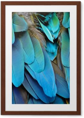 Póster Enmarcado Harlequin Macaw plumas
