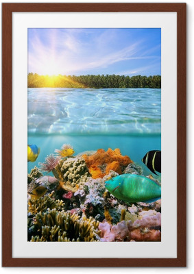 Poster i Ram Solnedgång och färgstarka undervattenslivet