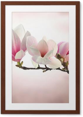 Poster en cadre Magnolia