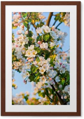 Poster in Cornice Apple-albero in fiore