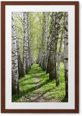 Birch-tree alley Framed Poster