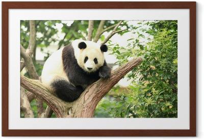 Gerahmtes Poster Riesenpanda am Wald