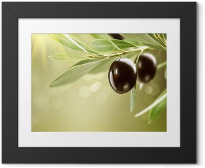 Poster i Ram Växande oliver. Svart mogen oliv på ett träd