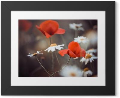 Plakat w ramie Czerwone kwiaty maku i dzikich stokrotek