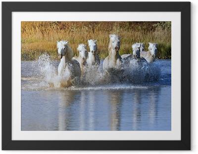 Ingelijste Poster Paard Splash