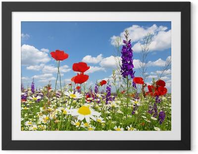 Plakat w ramie Czerwone kwiaty maku i dzikich