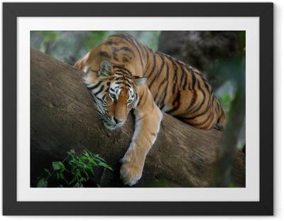 Gerahmtes Poster Tiger auf Baum