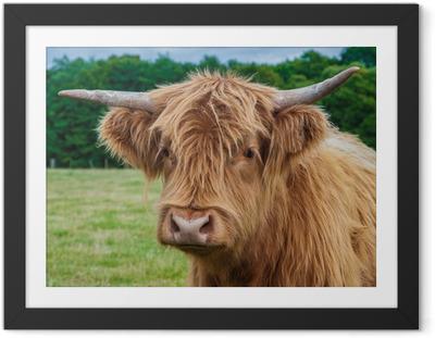 Gerahmtes Poster Hochland-Longhorn-Vieh