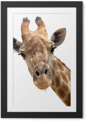 Póster com Moldura Giraffe closeup