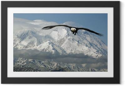 Ingelijste Poster Bald eagle in de bergen