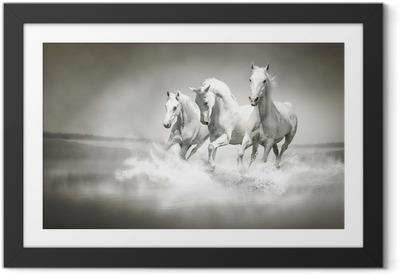 Póster com Moldura Herd of white horses running through water
