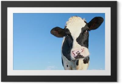 Holstein lehmä sinistä taivasta vastaan Kehystetty juliste
