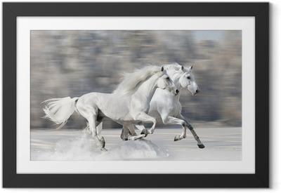 Poster in Cornice Due cavalli bianchi in inverno corrono al galoppo