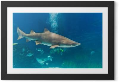 Ingelijste Poster Zandtijgerhaai (Carcharias taurus) onderwater close-up portret