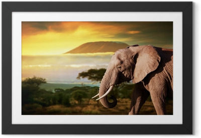Póster com Moldura Elephant on savanna. Mount Kilimanjaro at sunset. Safari