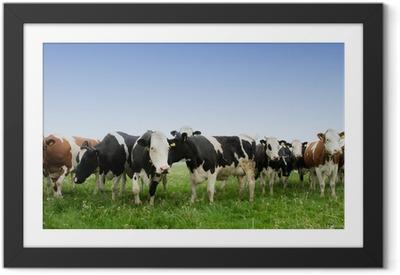 Póster com Moldura cow in a meadow