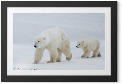 Póster com Moldura Mãe urso polar e filhote que anda no gelo