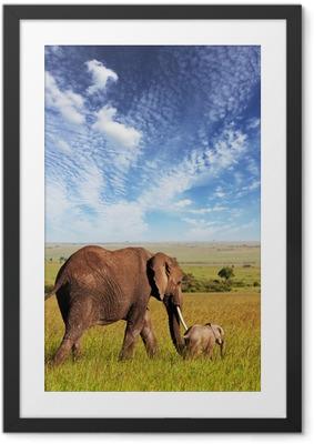 Póster com Moldura Elephant