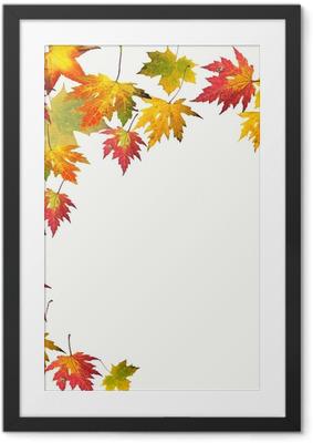 Farben des Herbstes: Bunte Ahorn-Blätter Framed Poster